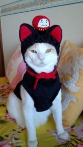八男・チャロ(日本猫 白+少しベージュ♂)