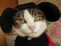 六男・ミュウミュウ(日本猫 パンダ猫♂)