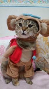 三女・ロミ(日本猫 麦わら模様♀)